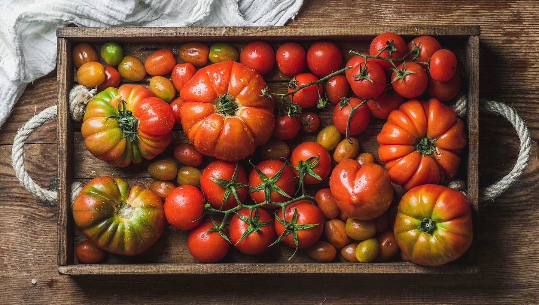 8 Tomatensorten für die italienische Küche   ORO di Parma